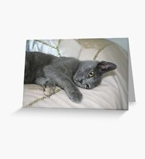Grey Kitten Relaxed On A Bed Greeting Card