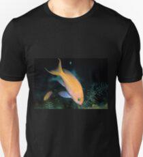 One-stripe Anthias T-Shirt