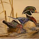 WOOD DUCK - water colour - sold by Marilyn Grimble