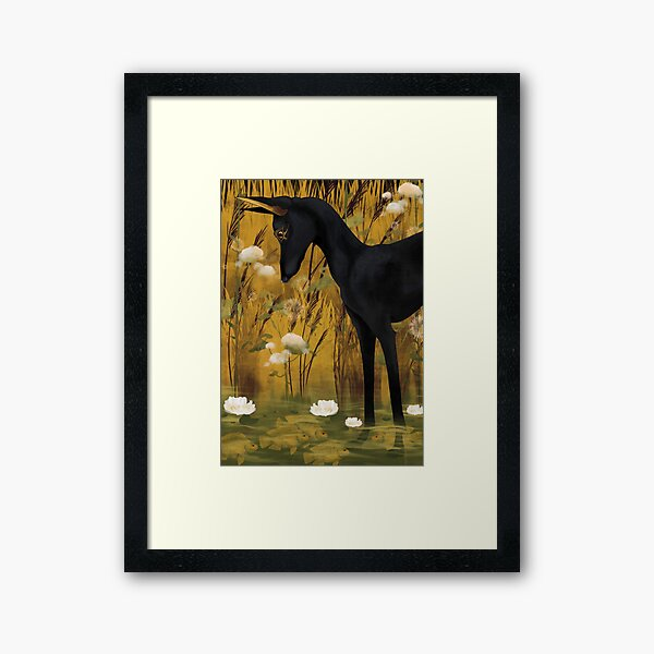 Anubis in pond with tilapia  Framed Art Print