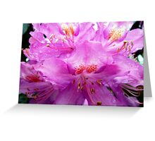 Beautiful Pink Rhododendron Pontica Greeting Card