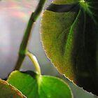 Winter Begonia #2 by Eileen McVey