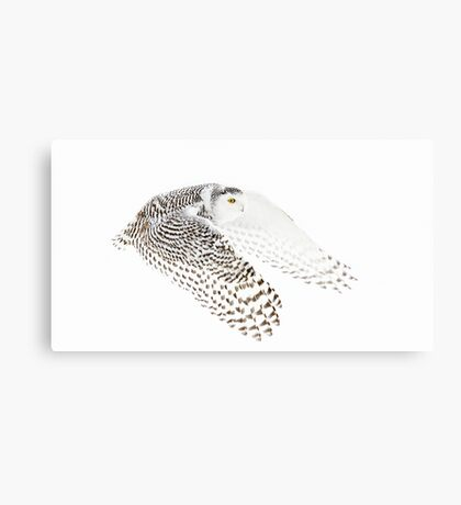 Wings Out - Snowy Owl Canvas Print