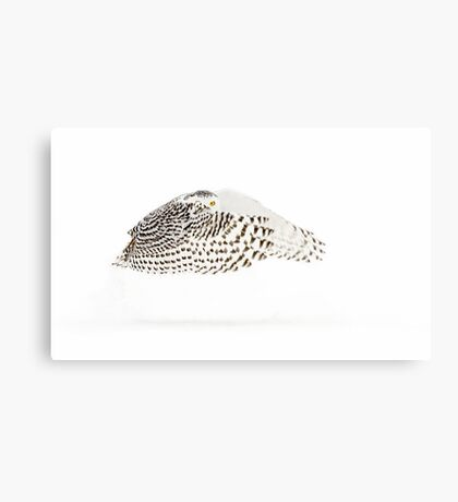 The Count - Snowy Owl Canvas Print