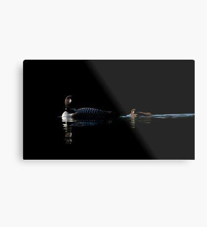 Common Loon - Buck Lake, Ontario Metal Print