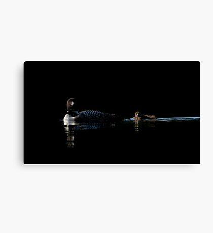 Common Loon - Buck Lake, Ontario Canvas Print