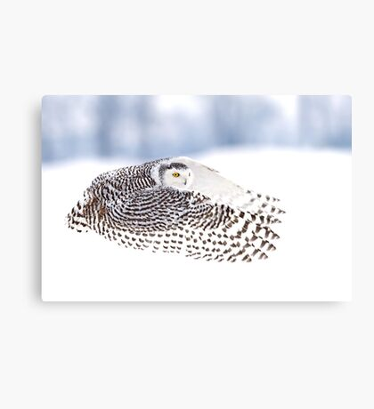 Wings - Snowy Owls Canvas Print