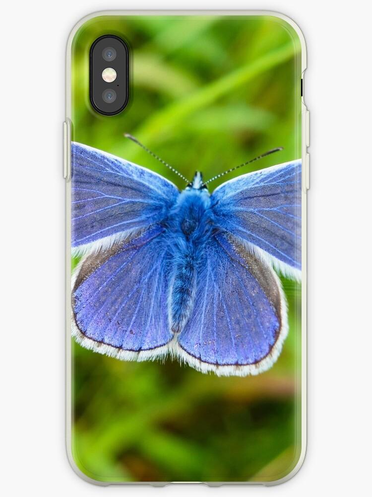 A male Common Blue butterfly by John Keates