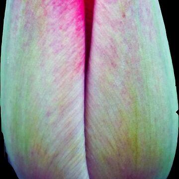 Tulip 2 by pixies000