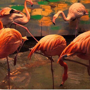 flamingo by pixies000