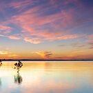 Four Trees - Wellington Point Qld Australia by Beth  Wode