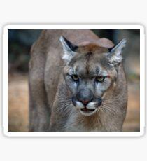 Puma Sticker