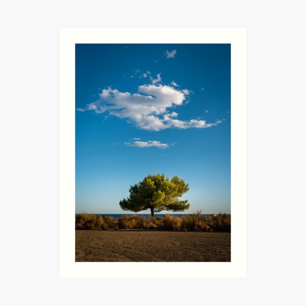 Little Tree - Little Cloud Art Print