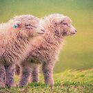 Spring Lambs   (SW) by Ray Warren