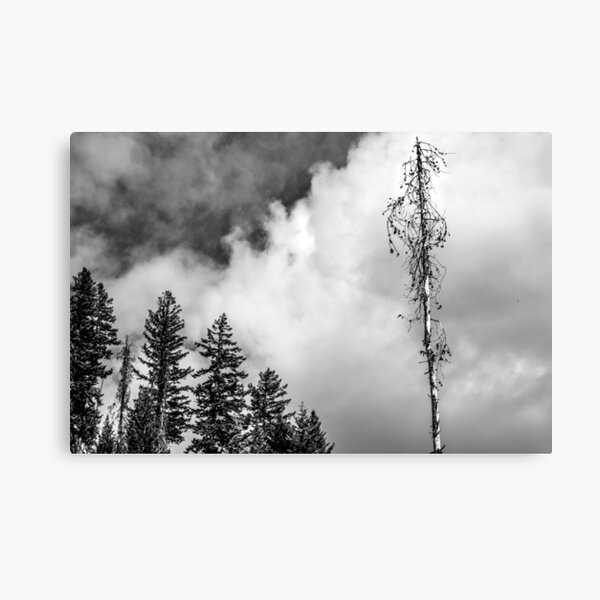 Manning Park trees and moody sky Canvas Print