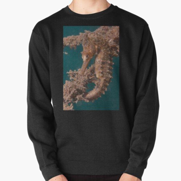Sydney Seahorse, Chowder Bay, Sydney Harbour Pullover Sweatshirt