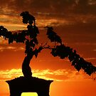 Zen Sunset by Barbara  Brown
