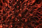 fireworks 31/12/15 by david gilliver