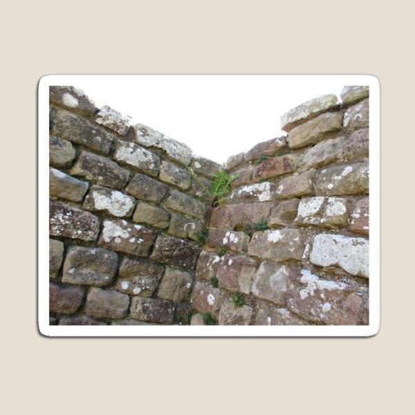 Merch #102 -- The Corner Plants (Hadrian's Wall) Magnet