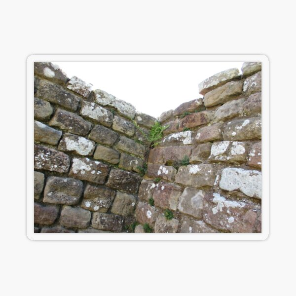 Merch #102 -- The Corner Plants (Hadrian's Wall) Transparent Sticker
