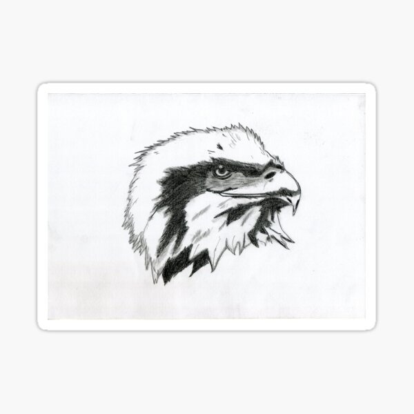 Realistic Eagle Drawing Art - Black and White Eagle Sticker