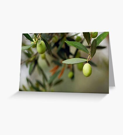 Olives On A Branch Greeting Card
