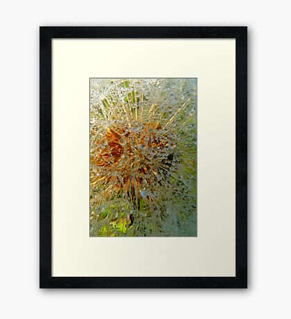 Dandi Crystels Framed Print