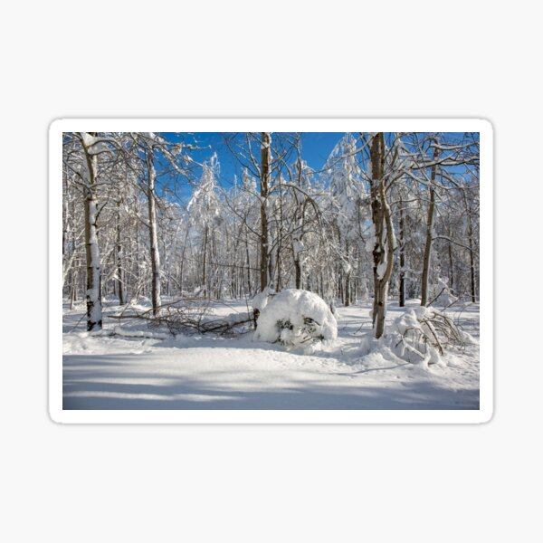 Smile of a snowy forest Sticker