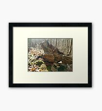 Weather Beater  Framed Print
