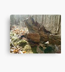 Weather Beater  Canvas Print