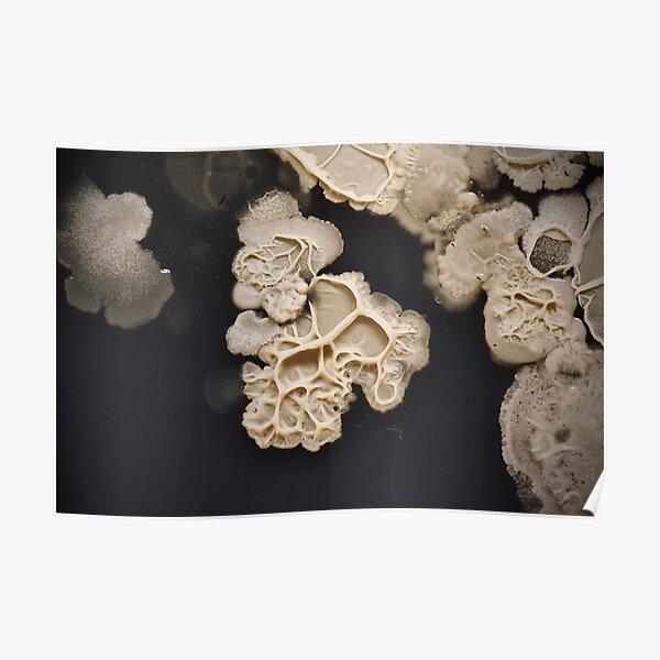 Textured Bacillus Poster