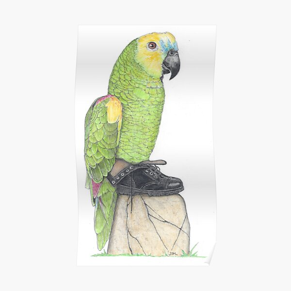 Parrot in combat boots Poster