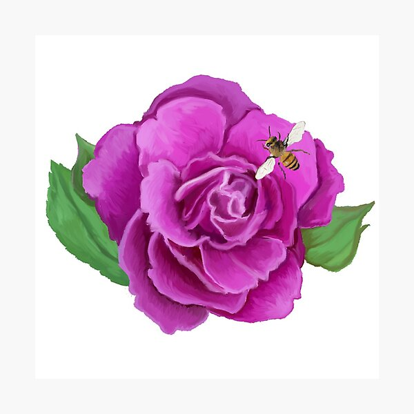 Melissae - Rose with Bee Photographic Print
