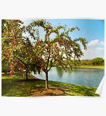 Mcbride Arboretum Crabapple Trees Poster