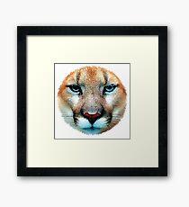 Cougar, puma, jaguar Framed Print