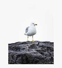 White Bird Photographic Print