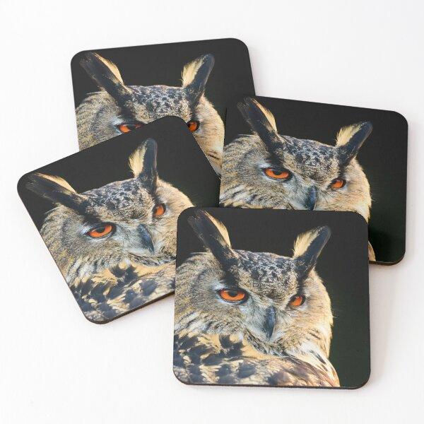 Eurasian Eagle Owl Coasters (Set of 4)