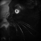 schwarze Schönheit von Marianna Tankelevich