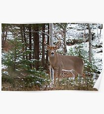 Bullet - White-tailed deer Poster