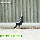 Magpie In the Carpark On a Hot Day - 080116 by Robert Phillips