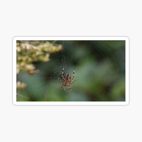 Spiders Web Sticker