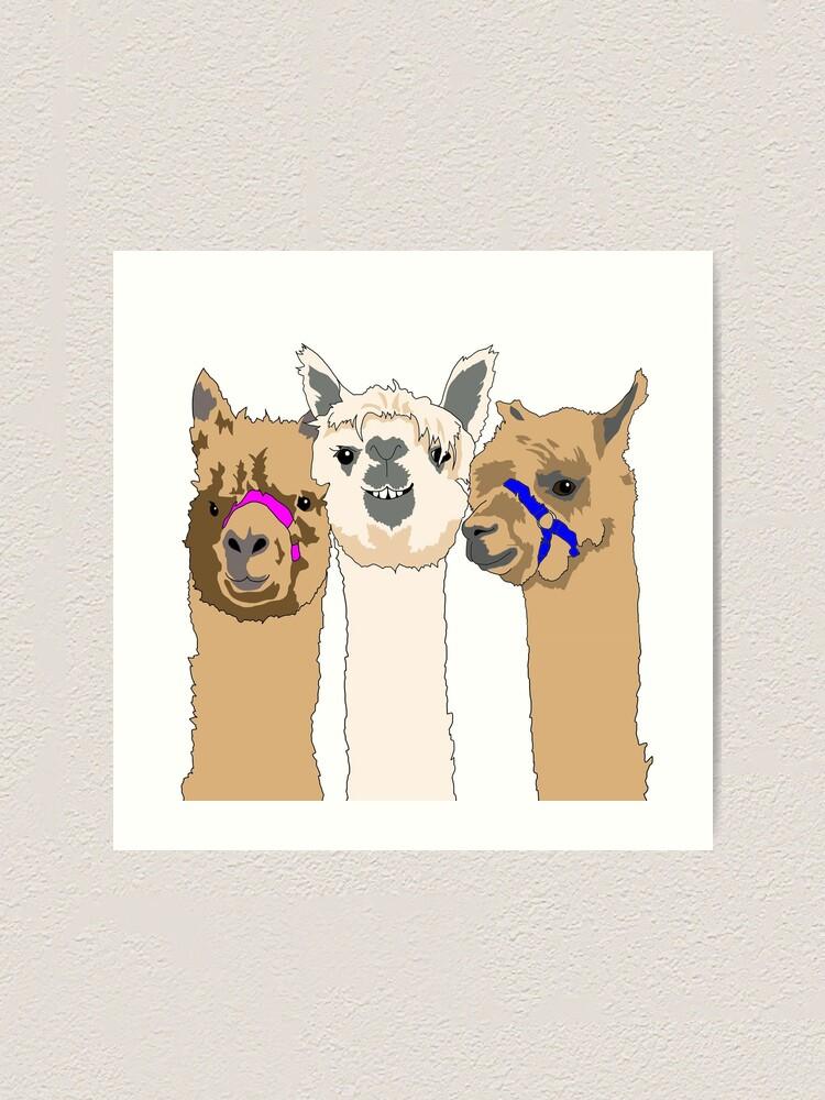 Alternate view of Three Alpacas Art Print