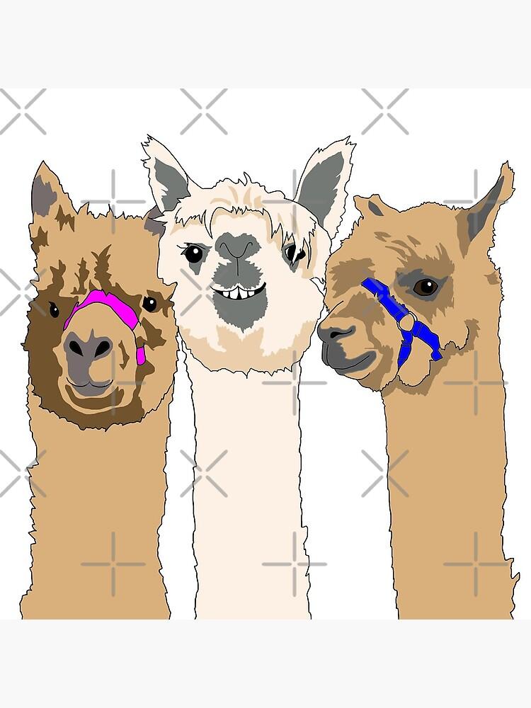 Three Alpacas by emilydevineart