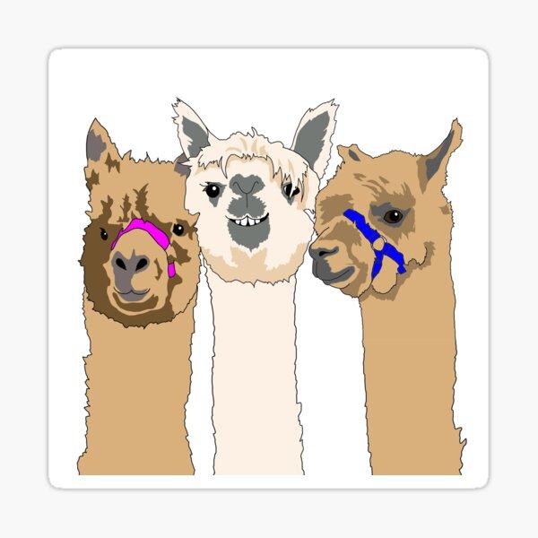 Three Alpacas Sticker