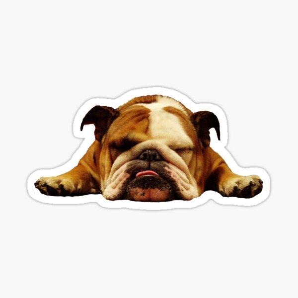 Bulldog Inglés - Lazy Beast Pegatina