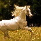 Arabian Stallion by joche