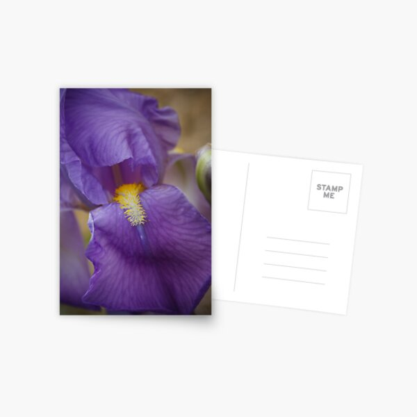 Iris flower close up Postcard