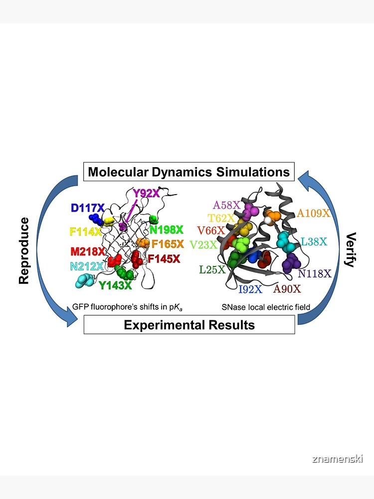 Molecular Dynamics Simulation by znamenski