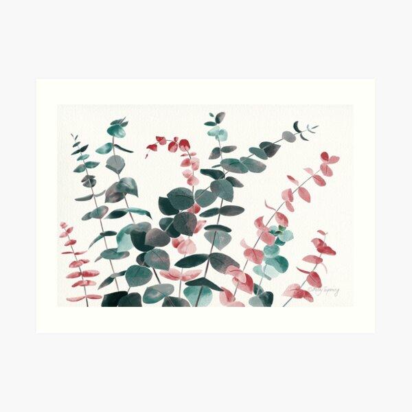 Eucalyptus Silver Dollar Art Print