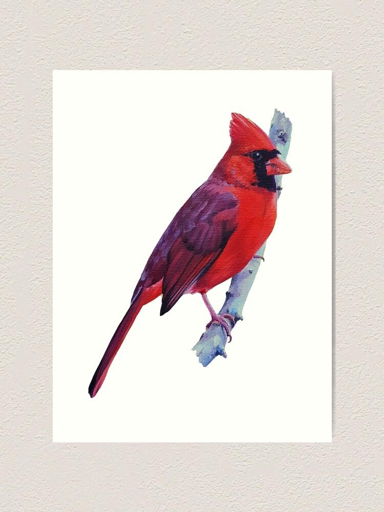 Alternate view of Northern Cardinal (no background) Art Print